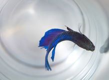 μπλε ψάρια Στοκ φωτογραφία με δικαίωμα ελεύθερης χρήσης