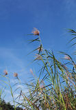 μπλε ψηλός τροπικός ουρα στοκ φωτογραφία με δικαίωμα ελεύθερης χρήσης