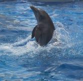 μπλε ύδωρ δελφινιών Στοκ φωτογραφία με δικαίωμα ελεύθερης χρήσης