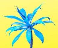 Μπλε aloe Σχέδιο μόδας γκαλεριών τέχνης ελάχιστος Στοκ Εικόνες