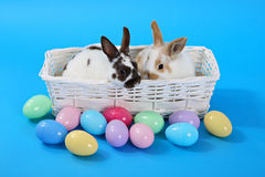 μπλε bunnies Στοκ φωτογραφία με δικαίωμα ελεύθερης χρήσης