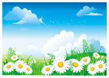 μπλε chamomile ουρανός Στοκ Εικόνες