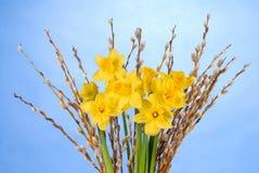 μπλε daffodils Στοκ Φωτογραφίες