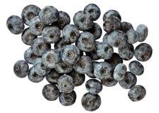Μπλε huckleberry Στοκ φωτογραφία με δικαίωμα ελεύθερης χρήσης