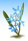 μπλε scillia ελεύθερη απεικόνιση δικαιώματος