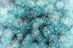 μπλε snowflakes ανασκόπησης άσπρος χειμώνας Κλάδοι δέντρων πεύκων κάτω από τις χειμερινές χιονοπτώσεις Στοκ εικόνα με δικαίωμα ελεύθερης χρήσης