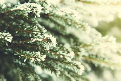 μπλε snowflakes ανασκόπησης άσπρος χειμώνας Κλάδος του FIR στο χιόνι Χιόνι και χριστουγεννιάτικο δέντρο Στοκ Εικόνα
