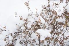 μπλε snowflakes ανασκόπησης άσπρος χειμώνας Ξηρά χλόη λουλουδιών και spikelets που καλύπτεται με έναν παγετό Στοκ φωτογραφία με δικαίωμα ελεύθερης χρήσης