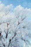 μπλε snowflakes ανασκόπησης άσπρος χειμώνας Παγωμένοι κλάδοι του χειμερινού δέντρου Στοκ φωτογραφίες με δικαίωμα ελεύθερης χρήσης