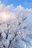 μπλε snowflakes ανασκόπησης άσπρος χειμώνας Παγωμένοι κλάδοι του χειμερινού δέντρου ενάντια στο μπλε ουρανό Στοκ Εικόνες