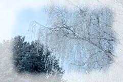 μπλε snowflakes ανασκόπησης άσπρος χειμώνας Χριστούγεννα ή νέα ανασκόπηση έτους Χειμώνας πρόσθιος Στοκ Φωτογραφίες