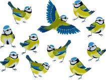 μπλε tits διανυσματική απεικόνιση