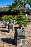 Μπονσάι flowerpot στο πεζοδρόμιο στοκ εικόνα