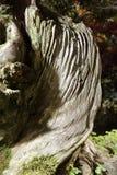 Μπονσάι-Podocarpus macrophyllus Στοκ εικόνα με δικαίωμα ελεύθερης χρήσης