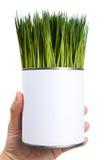 μπορέστε να καλύψετε το πράσινο μέταλλο με χορτάρι Στοκ εικόνες με δικαίωμα ελεύθερης χρήσης