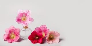 Μπουκάλι των λουλουδιών αρώματος και mallow Έννοια αρώματος αρώματος στοκ φωτογραφίες