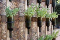 Μπουκάλια κρασιού που επαναχρησιμοποιούνται ως δοχείο λουλουδιών Στοκ Εικόνα