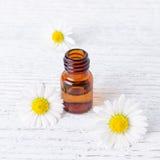 Μπουκάλι ενός μιλ. του chamomile πετρελαίου με τα φρέσκα και ξηρά chamomile λουλούδια Στοκ Εικόνες