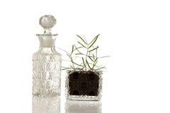 Μπουκάλι και εγκαταστάσεις γυαλιού κρυστάλλου στοκ εικόνες