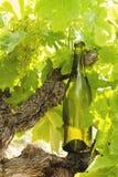 Μπουκάλι κρασιού σε μια άμπελο Στοκ φωτογραφία με δικαίωμα ελεύθερης χρήσης