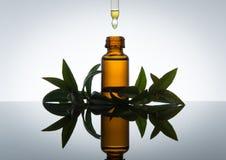 Μπουκάλι ουσιαστικού πετρελαίου με myrtle τα φύλλα, στο ηλέκτρινο γυαλί με dropper Στοκ φωτογραφίες με δικαίωμα ελεύθερης χρήσης