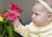 μπουκέτα λουλουδιών μω& στοκ φωτογραφία με δικαίωμα ελεύθερης χρήσης