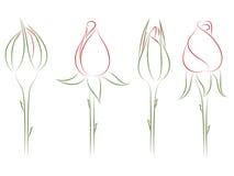 μπουμπούκια τριαντάφυλλ& απεικόνιση αποθεμάτων
