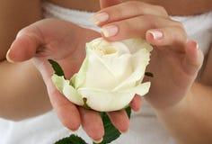 μπουμπούκι τριαντάφυλλο Στοκ Φωτογραφία