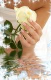 μπουμπούκι τριαντάφυλλο Στοκ φωτογραφία με δικαίωμα ελεύθερης χρήσης