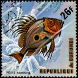 ΜΠΟΥΡΟΥΝΤΙ - CIRCA 1974: το γραμματόσημο, που τυπώνεται στο Μπουρούντι, παρουσιάζει Dory Zeus του John ψαριών faber Στοκ Φωτογραφία