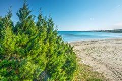 Μπους από την ακτή στη Σαρδηνία Στοκ φωτογραφία με δικαίωμα ελεύθερης χρήσης