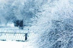 Μπους από το χιόνι στο παγωμένο πάρκο στο άσπρο και μπλε υπόβαθρο Παγωμένος κλάδος των δέντρων Στοκ Φωτογραφίες