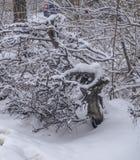 Μπους κάτω από το χιόνι Στοκ φωτογραφίες με δικαίωμα ελεύθερης χρήσης