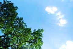 Μπους και σύννεφο Στοκ εικόνες με δικαίωμα ελεύθερης χρήσης