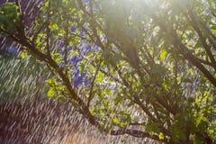 Μπους στη βροχή Στοκ φωτογραφία με δικαίωμα ελεύθερης χρήσης