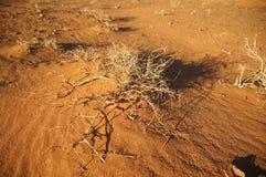Μπους στη μογγολική έρημο Στοκ Εικόνες