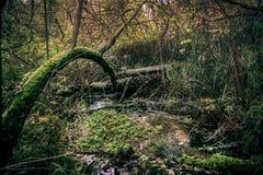 Μπους στο δάσος Στοκ φωτογραφίες με δικαίωμα ελεύθερης χρήσης