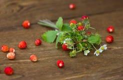 Μπους της άγριας φράουλας Στοκ Εικόνες