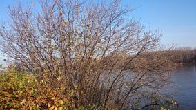 Μπους το φθινόπωρο Στοκ εικόνα με δικαίωμα ελεύθερης χρήσης