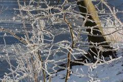 Μπους το χειμώνα στοκ εικόνα