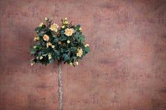 Μπους των κίτρινων τριαντάφυλλων Στοκ Εικόνες