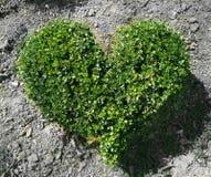 Μπους υπό μορφή καρδιάς στοκ φωτογραφία με δικαίωμα ελεύθερης χρήσης