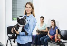 Μπουλντόγκ εκμετάλλευσης γυναικών με τον κώνο στην κλινική Στοκ Φωτογραφία