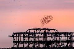 ΜΠΡΑΙΤΟΝ, ΑΝΑΤΟΛΗ SUSSEX/UK - 26 ΙΑΝΟΥΑΡΊΟΥ: Ψαρόνια πέρα από το derel Στοκ Φωτογραφία
