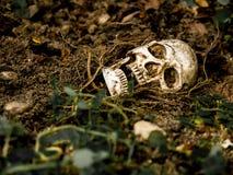 Μπροστά από το ανθρώπινο κρανίο που θάβεται στο χώμα με τις ρίζες του δέντρου στην πλευρά Στοκ εικόνες με δικαίωμα ελεύθερης χρήσης