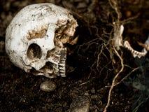 Μπροστά από το ανθρώπινο κρανίο που θάβεται στο χώμα με τις ρίζες του δέντρου στην πλευρά Στοκ εικόνα με δικαίωμα ελεύθερης χρήσης