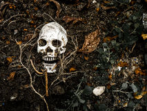 Μπροστά από το ανθρώπινο κρανίο που θάβεται στο χώμα με τις ρίζες του δέντρου στην πλευρά Στοκ φωτογραφίες με δικαίωμα ελεύθερης χρήσης
