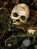 Μπροστά από το ανθρώπινο κρανίο που θάβεται στο χώμα με τις ρίζες του δέντρου στην πλευρά Στοκ Φωτογραφία