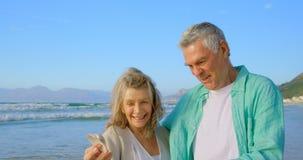 Μπροστινή άποψη του ανώτερου καυκάσιου ζεύγους που κρατά ένα θαλασσινό κοχύλι στην παραλία 4k απόθεμα βίντεο