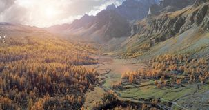Μπροστινή κεραία πέρα από την αλπική κοιλάδα βουνών και πορτοκαλιά δασικά ξύλα αγριόπευκων το ηλιόλουστο φθινόπωρο Υπαίθριες άγρι φιλμ μικρού μήκους